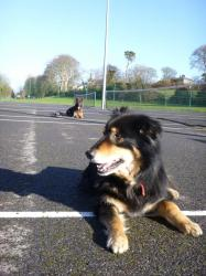 Another big training challange, Harley and Clay - two dogs from the same family.